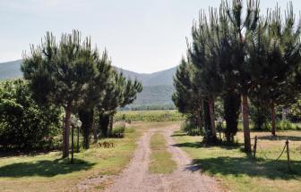 PARC01 - Bio-Weingut im Parco della Maremma - Park
