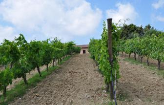 Case Nuove bei Talamone - Weinberg