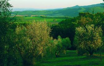 MURL01 - Kleine Ferienanlage bei Murlo - Landschaft