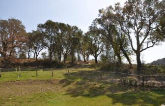 SCAR01 - Bio-Ferienhäuser bei Scarlino - Rasen