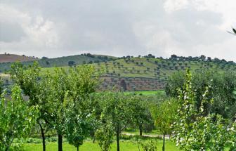 IST01 - Landgut bei Istia d' Ombrone - Blick