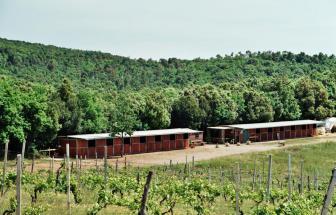 MAMA01 - Weingut bei Massa Marittima - Reitstall