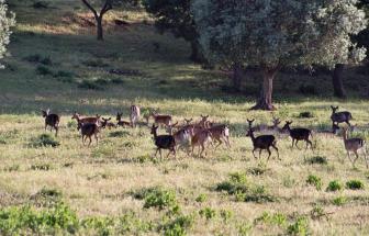 PARC03 - Podere Vergheria im Naturpark - Natur