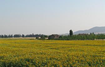 BURI02 - Casa Bandinelli bei Buriano - 2