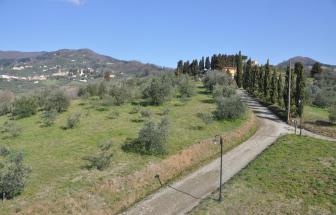LUCC14 - Podere Oasi bei Lucca - Zufahrt