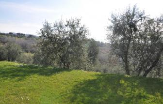 LUCC14 - Podere Oasi bei Lucca - Garten