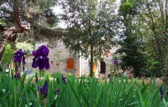 SUVE03 - Podere bei Suvereto - Garten 2