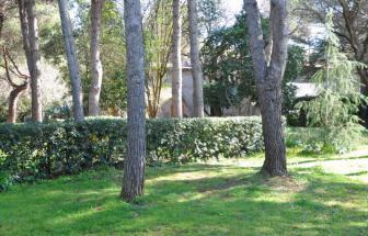 SUVE03 - Podere bei Suvereto - Garten mit hohen Bäumen