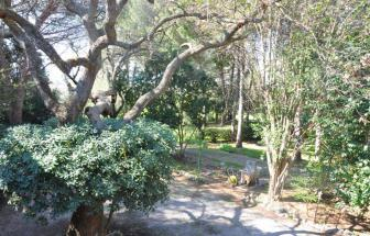 SUVE03 - Podere bei Suvereto - Blick in Garten