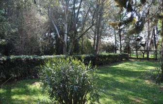 SUVE03 - Podere bei Suvereto - Garten