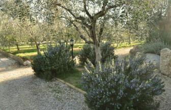 SAVI01 - Bio-Agriturismo bei San Vincenzo - Garten