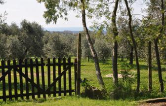 SUVE03 - Podere bei Suvereto - Blick vom Garten Olivenhain und Meer