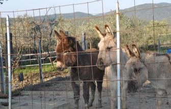 SAVI01 - Bio-Agriturismo bei San Vincenzo - Tiere