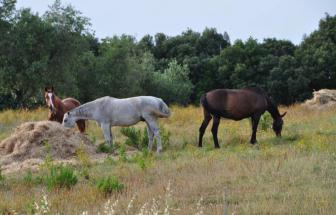 MAMA01 - Weingut bei Massa Marittima - Pferde