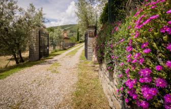 Bio-Agriturismo bei Castiglion Fiorentino - Einfahrt